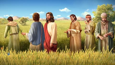 Perché il Signore Gesù permise ai Suoi discepoli di cogliere le spighe di grano da mangiare di sabato?
