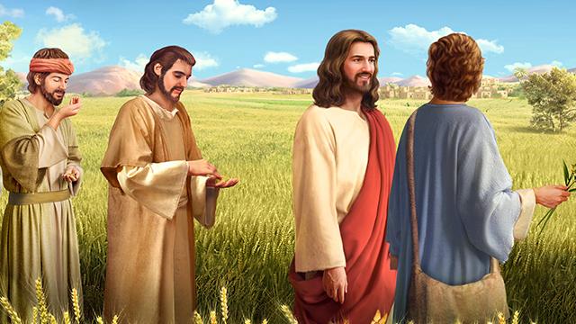 I discepoli di Gesù colsero alcune spighe per mangiarle