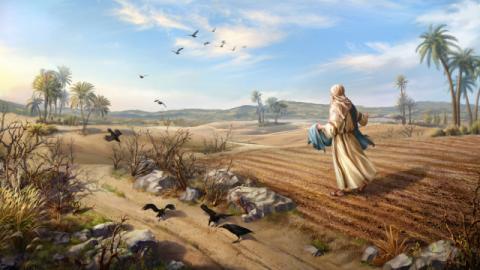 La parabola del seminatore: qual è la volontà del Signore che vi si cela?
