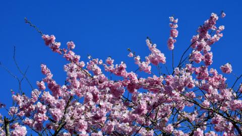 La primavera che incontrai il Signore