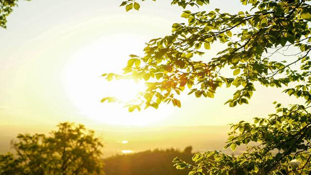 il sole e l'albero
