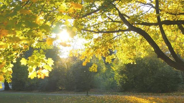 un raggio di sole attraverso un albero