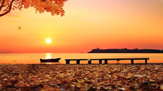 In autunno, il sole tramonta e la terra è coperta di foglie cadute.