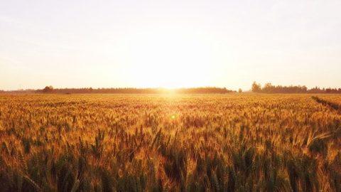 Il significato del giudizio di Dio negli ultimi giorni può essere visto nei risultati ottenuti dall'opera di giudizio di Dio negli ultimi giorni.